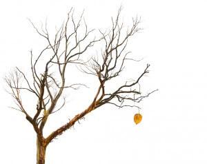 A maioria das pessoas vive como se a vida nunca fosse acabar e se esquece de que o último dia pode chegar a qualquer momento